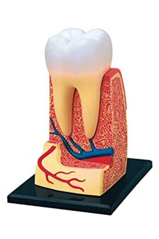 Molar Didáctico